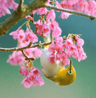 bird, birds, blossom, feeding, flowers, lovely