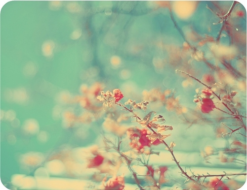 blossom, blossoms, branches, calm, cherry blossoms, cores, fiori, floral, flores, flower, flowers, hope, light blue, misc, nature, nostalgia, peace, photography, pink, pink blossom, polaroid, quiet, sakura, shallow depth of field, sky, tree, trees