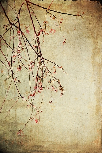 antique, branch, cherry blossom, cherry blossoms, floral, flowers, grungey, pink, tan