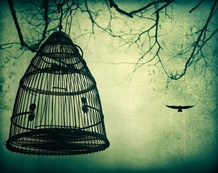 bird, birdcage, cage, dark, green, misterious, sky, tattoo, vintage, whimsical