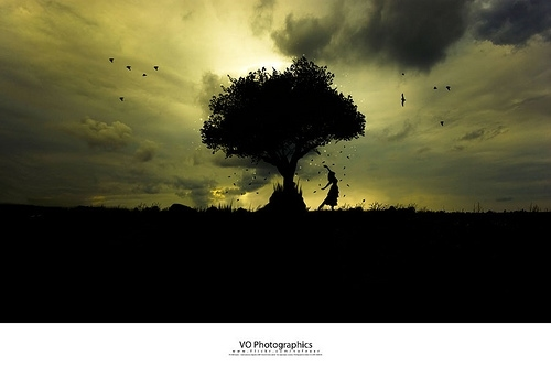 birds, clouds, freedom, girl, siluet, sky, tree