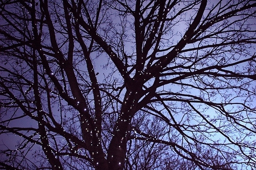 branches, christmas, lights, night, sky lit up, sparkle, tree, twinkle, winter