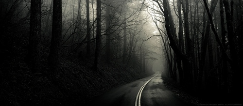 black and white, dark, eerie, empty, forest, misty