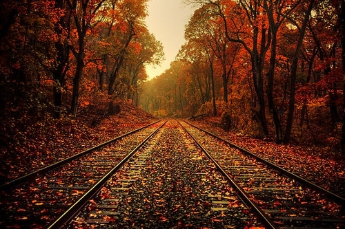 atmosphere, autumn, fall, falling leaves, orange, railroad, red, train tracks, trees, vyer
