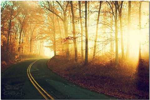 forest, light, nature, road, trees, vyer