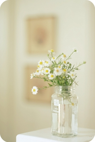 daisies, daisy, flower, flowers, margaridas, white
