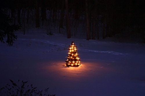 christmas, christmas tree, cold, evening, lights, night