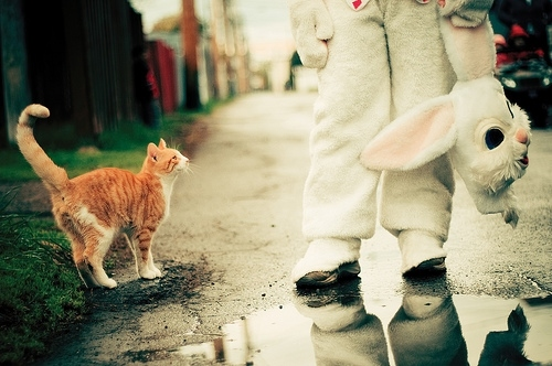 animal costumes, bunny, cat, costume, emotion, photography