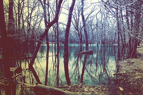 country, down by the water, south, swamp, trees, water