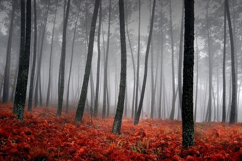 contrast, fog, forest, haze, photography, red, sith, trees