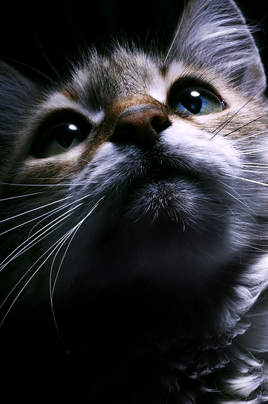 beautyful, cat, close up, cute, cuteness, eyes, face, feline, kitty, proximal, too cute