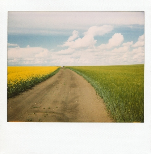 clouds, colors, flowers, grass, plains, polaroid