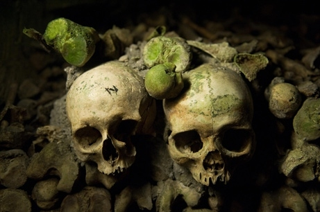 bone, catacombs, death, moss, paris, skulls