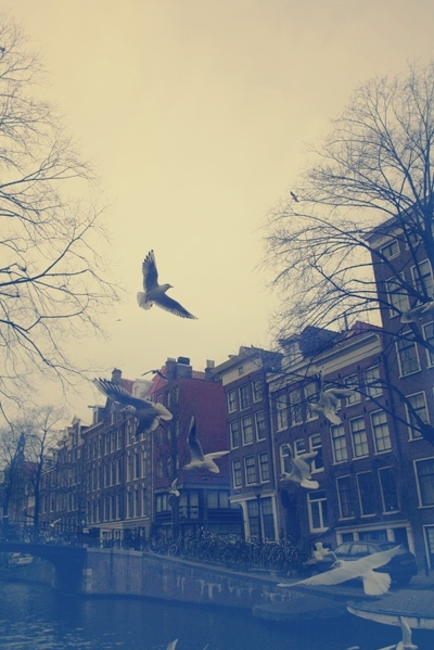 amsterdam, birds, canal, houses, street