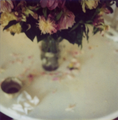 dead, faded, flowers, peonies, photography, purple