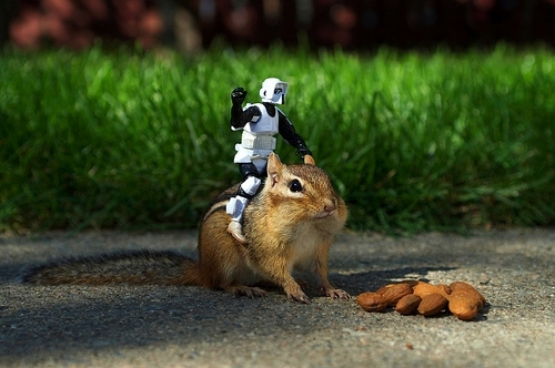 almonds, chipmunk, cute, squirrel, star wars, stormtrooper
