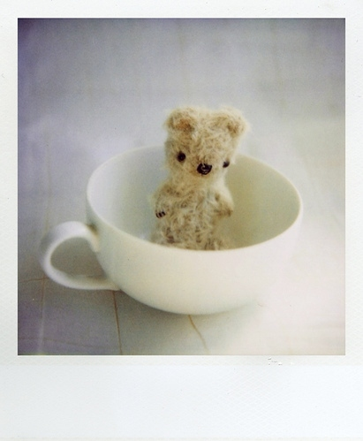 bear, cup, polaroid, stuffed, sweet, tea