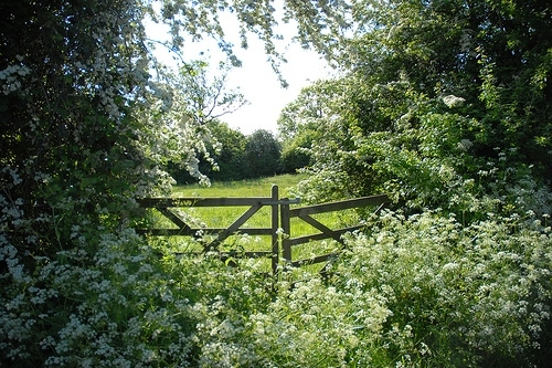 countryside, england, fence, garden, gate, green