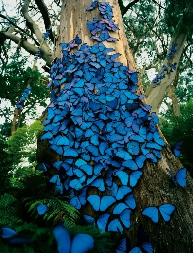 blue, bluemorpho, butterflies, butterfly, tree
