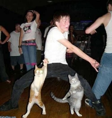 cat, cats, dance, drunk, weird