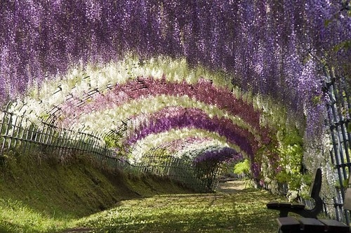 beautiful, flower, flowers, garden, landscape design, nature, photography, tunnel, wonderland