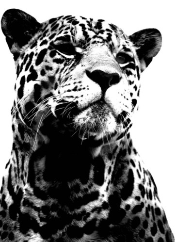 Pictures Of Animals In Black And White