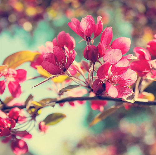 beautiful, flowers, my dreams, photography, pink flowers