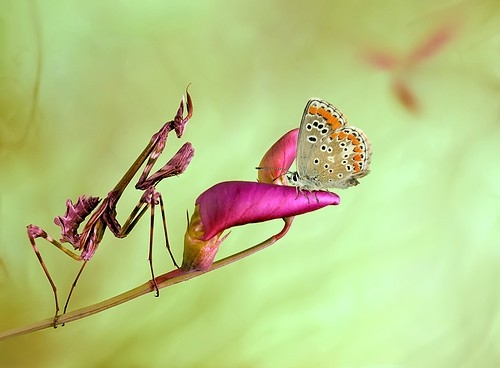 animal, bugs, butterfly and flower