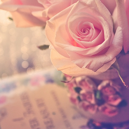 beautiful, cool, flower, flowers, foliage, nature, pink, rose, roses