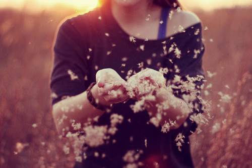 fade, feeling, flower, fly, girl, hands