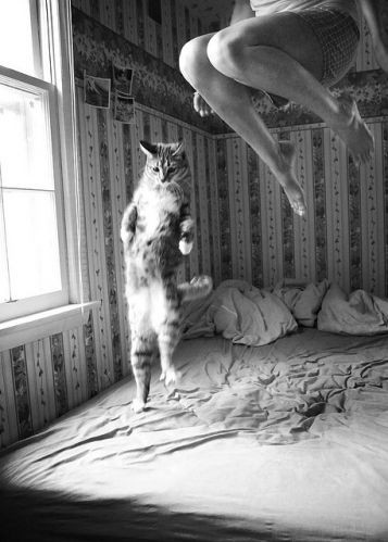 bed, black and white, cat, cat jumping, cats, cute