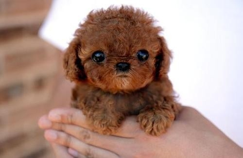adoreable, animal, animals, baby, cute, cutest dog ever