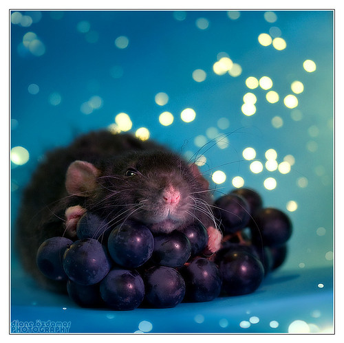 animal, beautiful, bokeh, cute, folder:visualizeus!!!, fruit