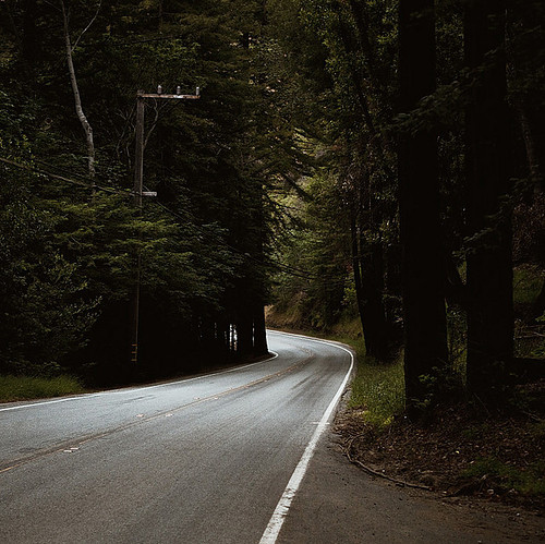 bend in the road, forest, landscape, nature, photography, road, travel