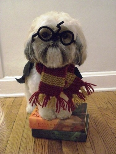 brilliant, cute, dog, funny, gryffindor, harry potter