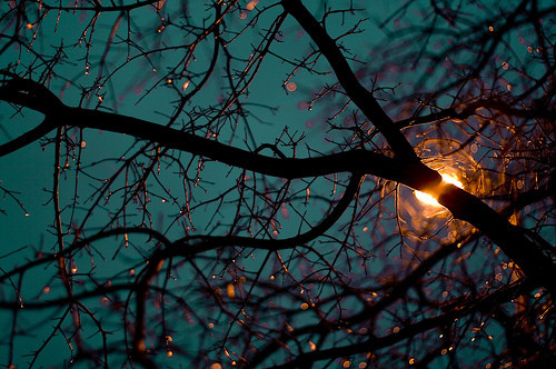 Background branches color lace light lights image - Tree branches with lights ...