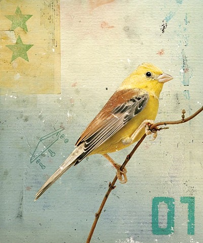 animal, art, bird, birds, collage, design