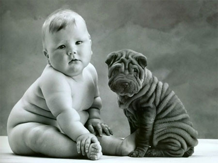 adorable, animal, babay, baby, baby and dog, baby portraits