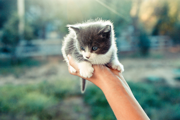 adorable, animal, cat, cute, fluffy, hand, katze, kitten, kitty
