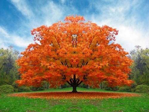 autumn, beauty, color, green, nature, orange