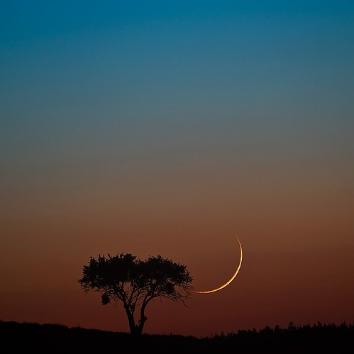 beautiful, landscape, moon, nature, night moon, outdoors, photography, sky, tree, trees