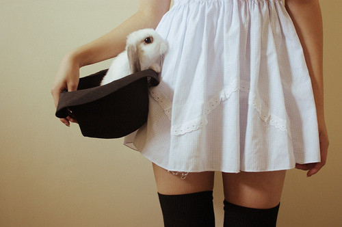 alice in wonderland, animal, bunny, dress, girl, hat