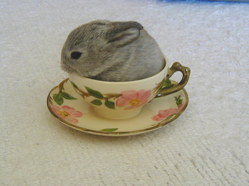 beautiful, cup, cute, mouse, pet, rabbit, sweet