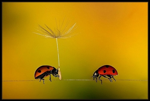 ads, animal, bugs, color, couple, cute, flower, funny, happy, humor, insect, lady bugs, ladybug, love, photography, romantic