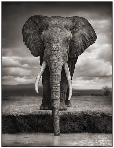 africa, african animals, animal, animales, animals, animals black and white