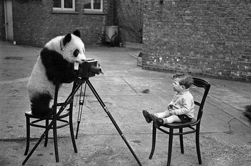 animal, animals, baby, bear, black, black and white, black and white photography, boy, camera, child, childhood friends, cute, cuteness, ddd, fun, funny, irony, kid, mono, panda, photgraphy, photo, photography, picture, polariod, pose, say cheese