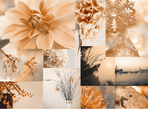 collage, color, colour, floral, flowers, graphic
