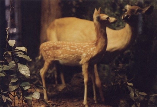 animal, animals, beauty, deer, fantasy, forest