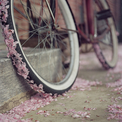 ?????, ??????, art, beautiful, bicicleta, bicycle, bike, blossom, feminine, floral, flower, flowers, french, girl, girlie, ilike, just for now, love, objects, photo, photography, pink, prominent, romantic, spring, streeth, wheel