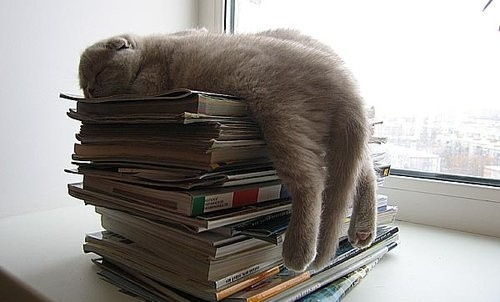 animal, animals, book, books, cat, cats